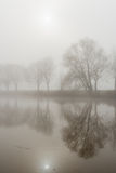 Reflected trees on a misty morning Stock Photos