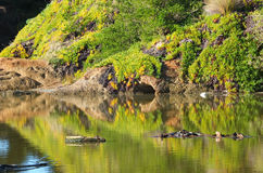 Reflected vegetation on river Royalty Free Stock Photo