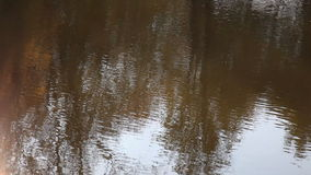 Reflected in water. Autumn trees are reflected in water stock footage