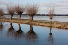 Reflected willows. Willows along a path in between two lakes are reflected in the blue water Stock Photography