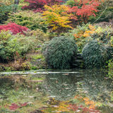 Reflecting Autumn. Looking across a pond at the colours of a Japanese style garden stock images