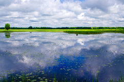 Reflecting clouds, water lilies Stock Images