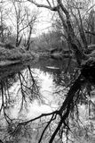 The Reflecting Creek. Black and white shot of trees at the edge of the creek reflecting in the water. Shot in Pryor, Oklahoma using Canon EOS T3i and 18-55 mm Stock Photo