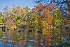 Reflecting on Fall Stock Photos