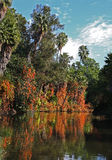 Reflecting Fall pond with trees Stock Photo