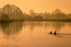 Reflecting orange morning sun in lake with birds Royalty Free Stock Image