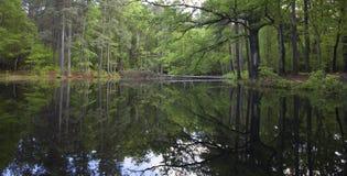 Reflecting pond Stock Photos