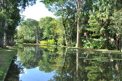 Reflecting pool in a botanical garden Royalty Free Stock Photos