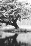 Reflecting serenity royalty free stock photos