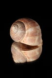 Reflecting snail shell Stock Photo