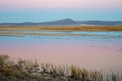 Reflecting sunset. Sunset over the wetlands at Klamath Falls Wildlife Refuge royalty free stock images