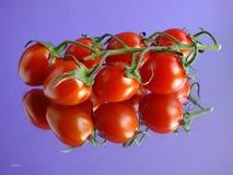 Reflecting Tomato Vine Royalty Free Stock Photo