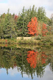 Reflecting tree Royalty Free Stock Photography