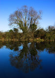 Reflecting Tree. A very still river to create a perfect mirror image of the tree in the water stock image
