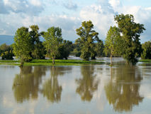 Reflecting trees. Flooded trees reflecting in water Royalty Free Stock Image