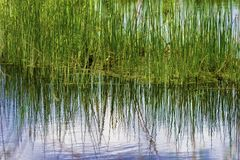 Reflecting waters giving a natural abstract look. Stock Photography