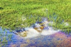 Reflection湖天堂瑞尼尔山国家公园华盛顿 图库摄影
