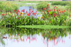 Reflection. Blooming flower and its reflection in the water Stock Photo