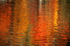 Reflection. Autumn tree reflected in water Stock Images