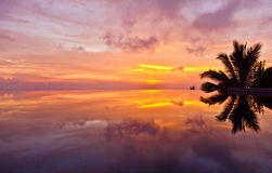 In reflection. Beautiful sunset and a palm tree in the reflection of water Royalty Free Stock Images