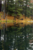 Reflection. Of colorful forest in lake surface in the overcast day Stock Photos