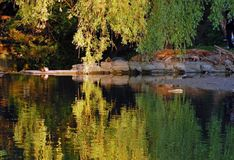 Reflection. Queit view of willow reflection in pond at sunset Stock Photo