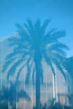 Reflection. Palm Tree Reflection stock photo