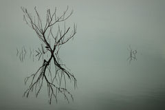 Reflection. Of the dead tree branches and a fish bird via the lake before big storm coming Royalty Free Stock Photo