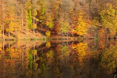 Reflection autumn colorful trees in the forest lake. stock photo