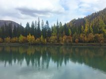 Reflection of autumn forest in the emerald water. Autumn landscape. Chuya river. Altai Mountains royalty free stock photography