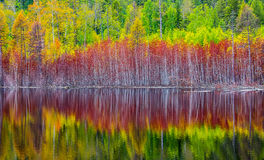 The reflection of autumn forest in the taiga lake. The reflection of autumn forest in boreal lake in Northern Russia Stock Photography