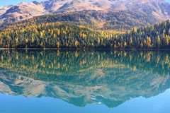 Reflection in autumn lake stock photography