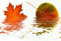 Reflection of autumn leaves. Stock Photography