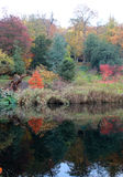 Reflection of autumn leaves in a lake Stock Image