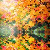 Reflection of autumn leaves Royalty Free Stock Photos