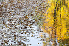 Reflection of an autumn tree in a lake. Royalty Free Stock Photo