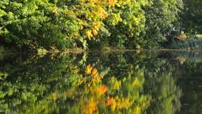 Lake in the park. Reflection of autumn trees in the lake stock video footage