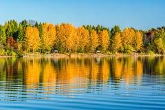Reflection of autumn trees on lake Stock Photos