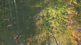 Reflection of autumn trees in the lake surface. Reflection of autumn forest in the quiet surface of the lake stock video footage