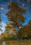 Reflection of autumn trees in a pond. Photographed in the town of Pushkin, Leningrad district, Russia Stock Photography