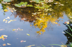 Reflection of autumn trees in a pond Royalty Free Stock Photo