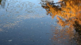 Reflection of autumn trees with yellow leaves in the river. Autumn mood. Reflection of autumn trees with yellow leaves in the river stock video