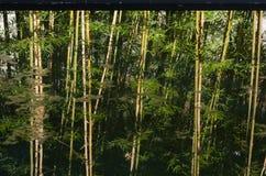 Reflection of bamboo garden Stock Image