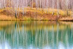 Reflection of bare birch forest in the water of calm lake in the overcast autumn weather