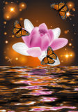 Reflection of a beautiful lotus flower with butterflies. On a glowing background Stock Images