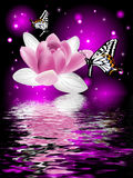 Reflection of a beautiful lotus flower with butterflies. On a glowing background Royalty Free Stock Photography