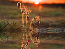 Reflection of beautiful spring flowers Stock Photos