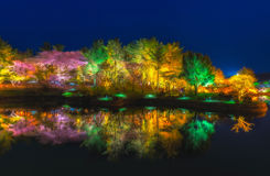 Reflection of Beautiful tree park at ningth Stock Photo