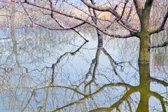 Reflection Royalty Free Stock Image