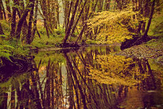 Reflection. The beauty of the still woods mirrored against the calmness of the clear water Stock Photo
